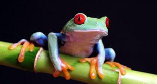 عالم الحيوانات : 10 حيوانات يحتاجها البشر للبقاء على قيد الحياة