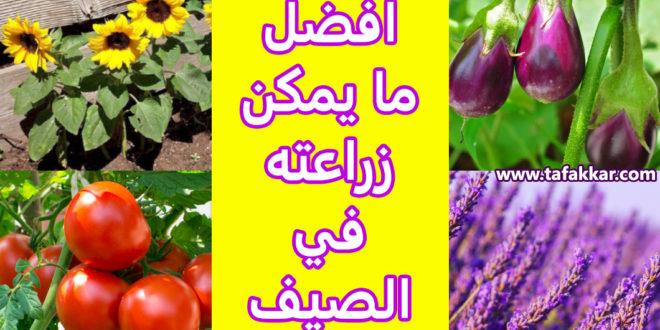 ماذا يزرع في الصيف
